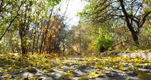 driving in fall, driving in autumn, safety, driving safety tips